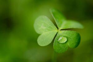Na počest Patrika - dnes v zelené!